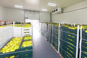 Shipping Frozen Vegetables