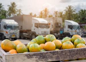 Orange Fruit and food distribution, tropical fruit of Thailand.