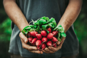 Organic vegetables. Farmers hands with freshly harvested vegetables